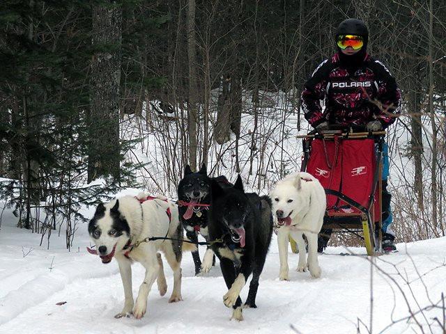 Mikayla M.'s 4 dog team