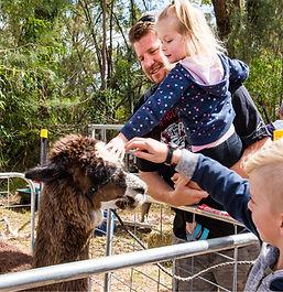 Mangrove Mountain Country Fair Farm Animals