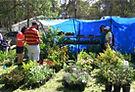 Mangrove Mountain Country Fair Plants