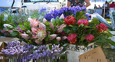 Mangrove Mountain Country Fair Flowers