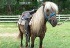 Mangrove Mountain Country Fair Pony Rides