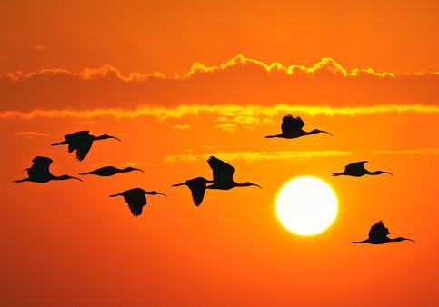 """""""Morning Flight"""""""