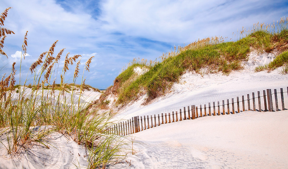 """""""Dune and Fence"""""""