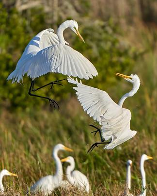 """Egret Dance"""