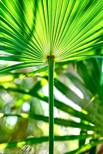 """""""Palm Fronds"""""""
