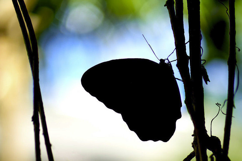 """Moth"""