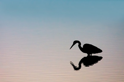 """""""Morning Silhouette"""""""