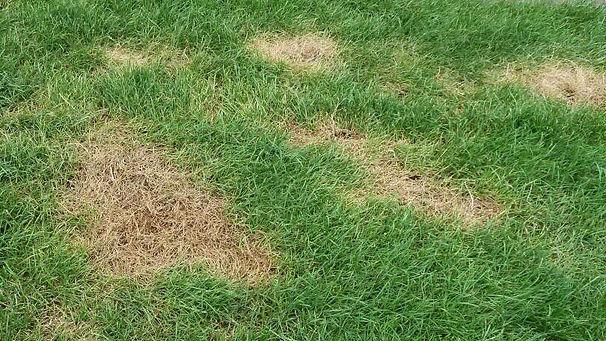 brown-grass-1.jpg