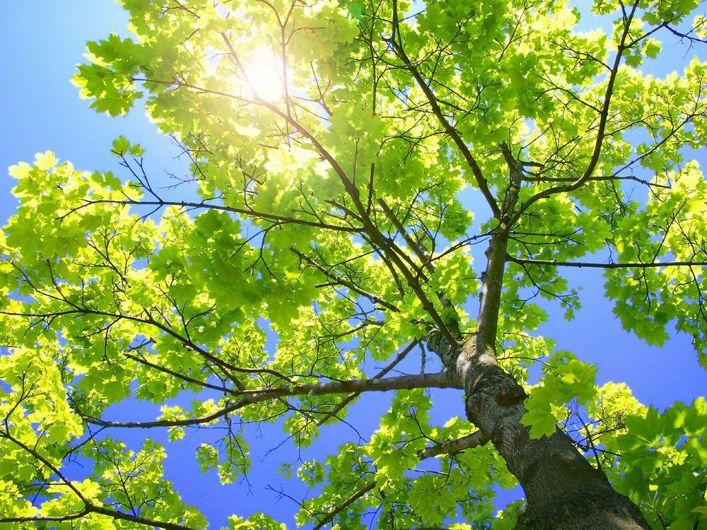 Healthy tree in sunlight
