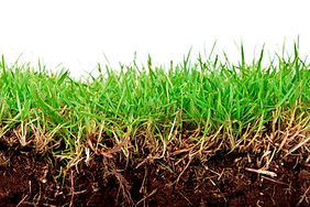 fresh-spring-green-grass-with-soil-isola