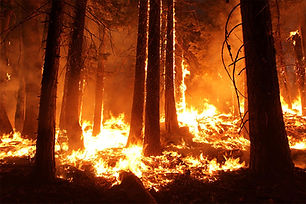 Wildfire-Stanislaus-National-Forest-Cali
