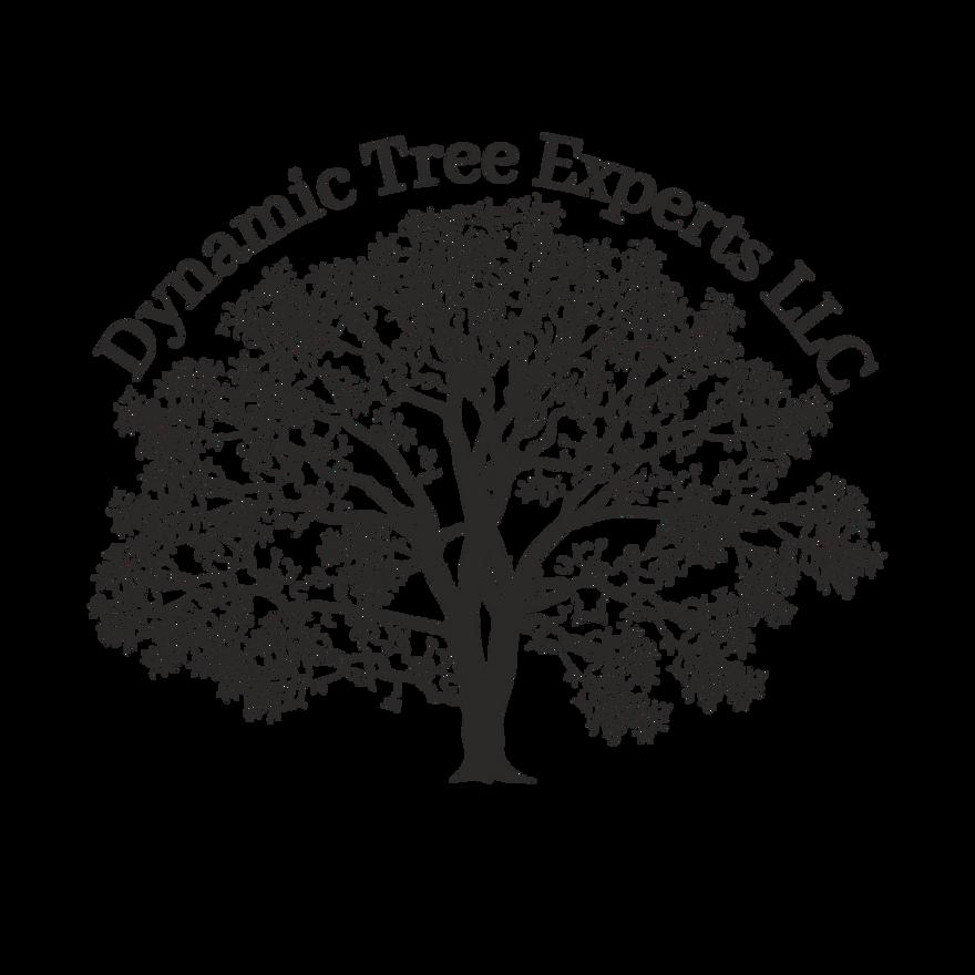 Dynamic Tree Experts LLC