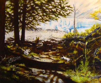 Bosque antiguo. Glaciar Perito Moreno