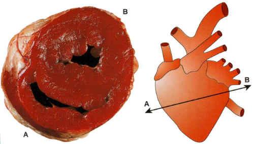 cardiologue casablanca