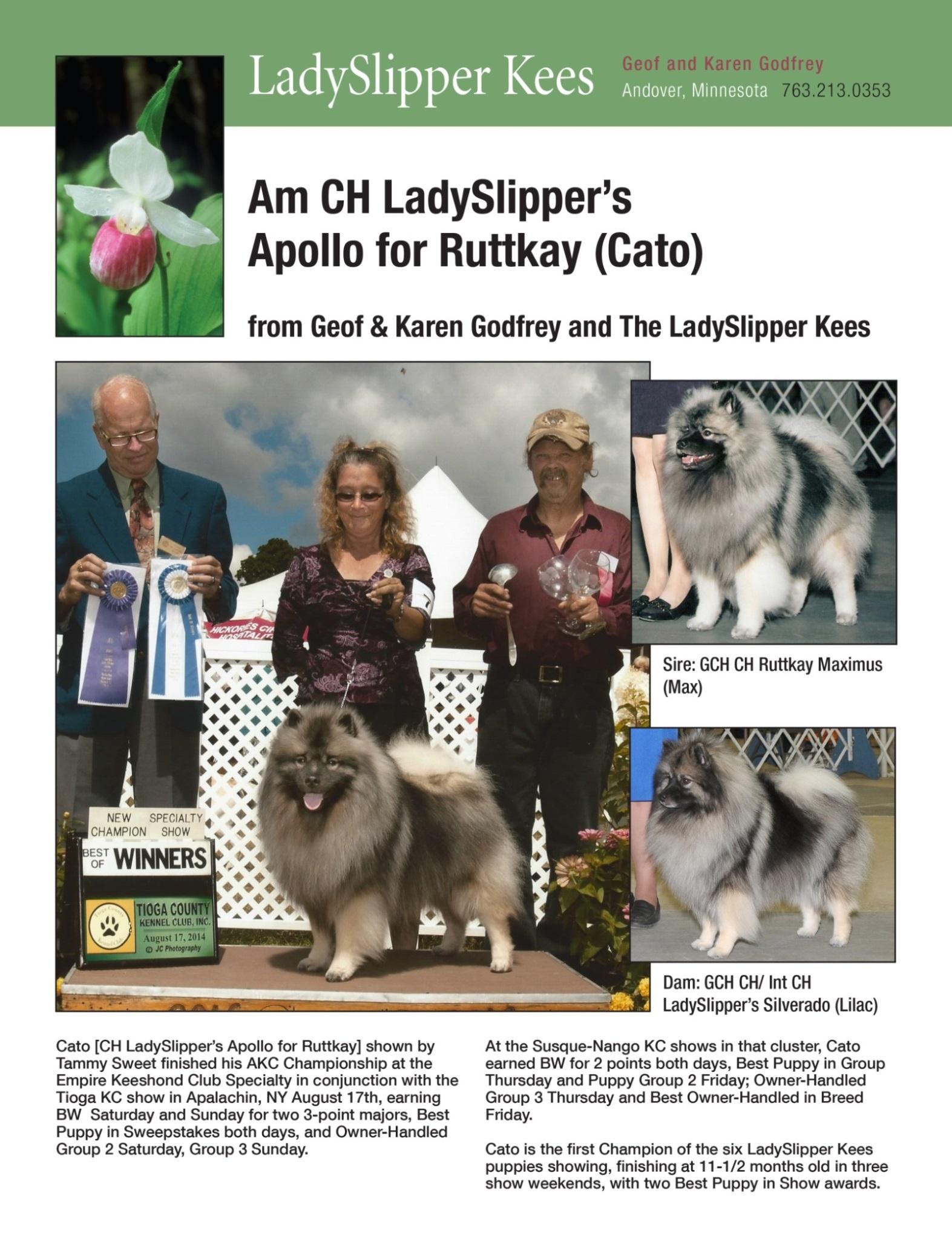 Lady Slipper-K&G Godfrey-2