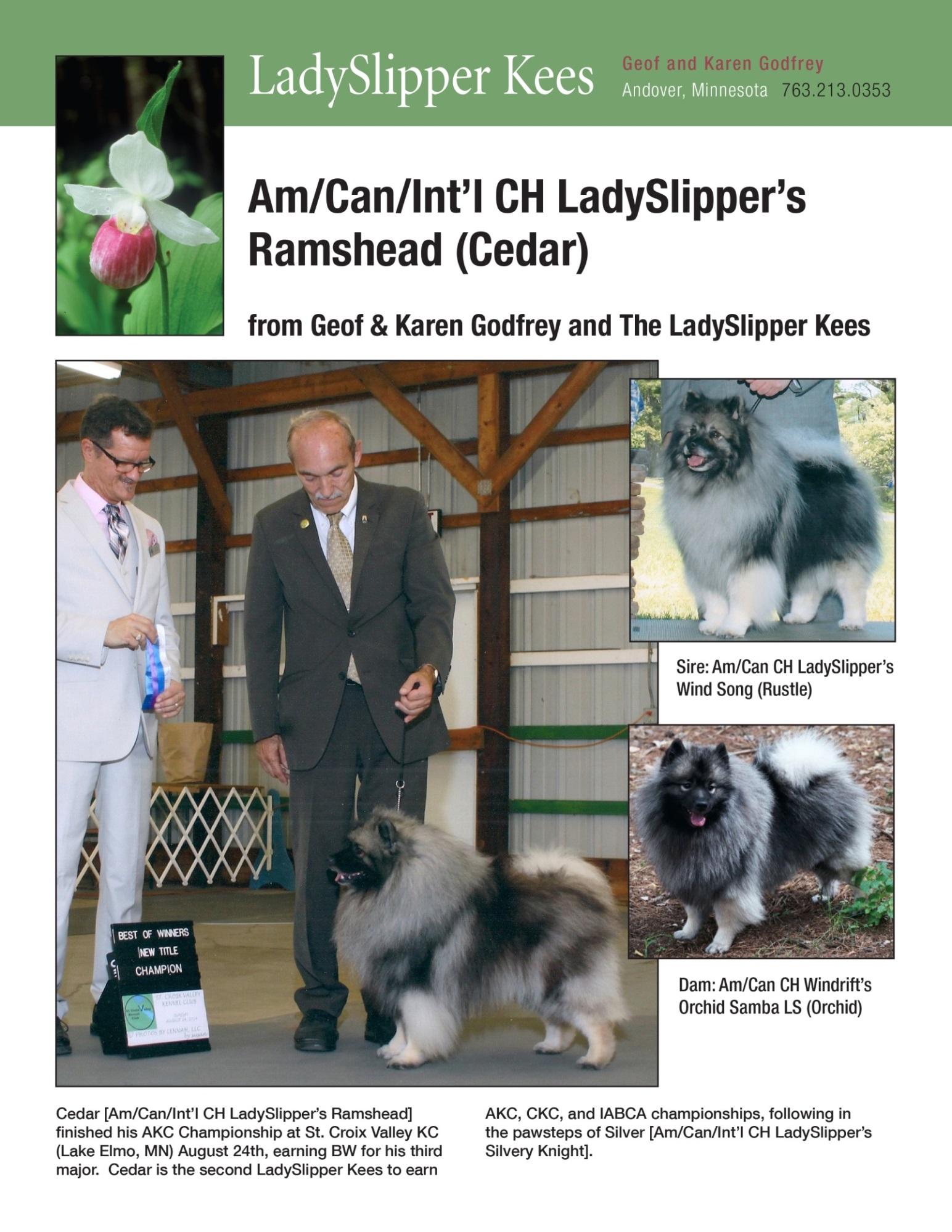 Lady Slipper-K&G Godfrey