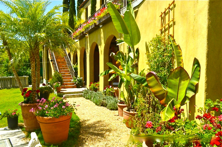 Lush Tropical Garden for Filming