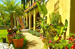Lush Tropical Garden for Filming