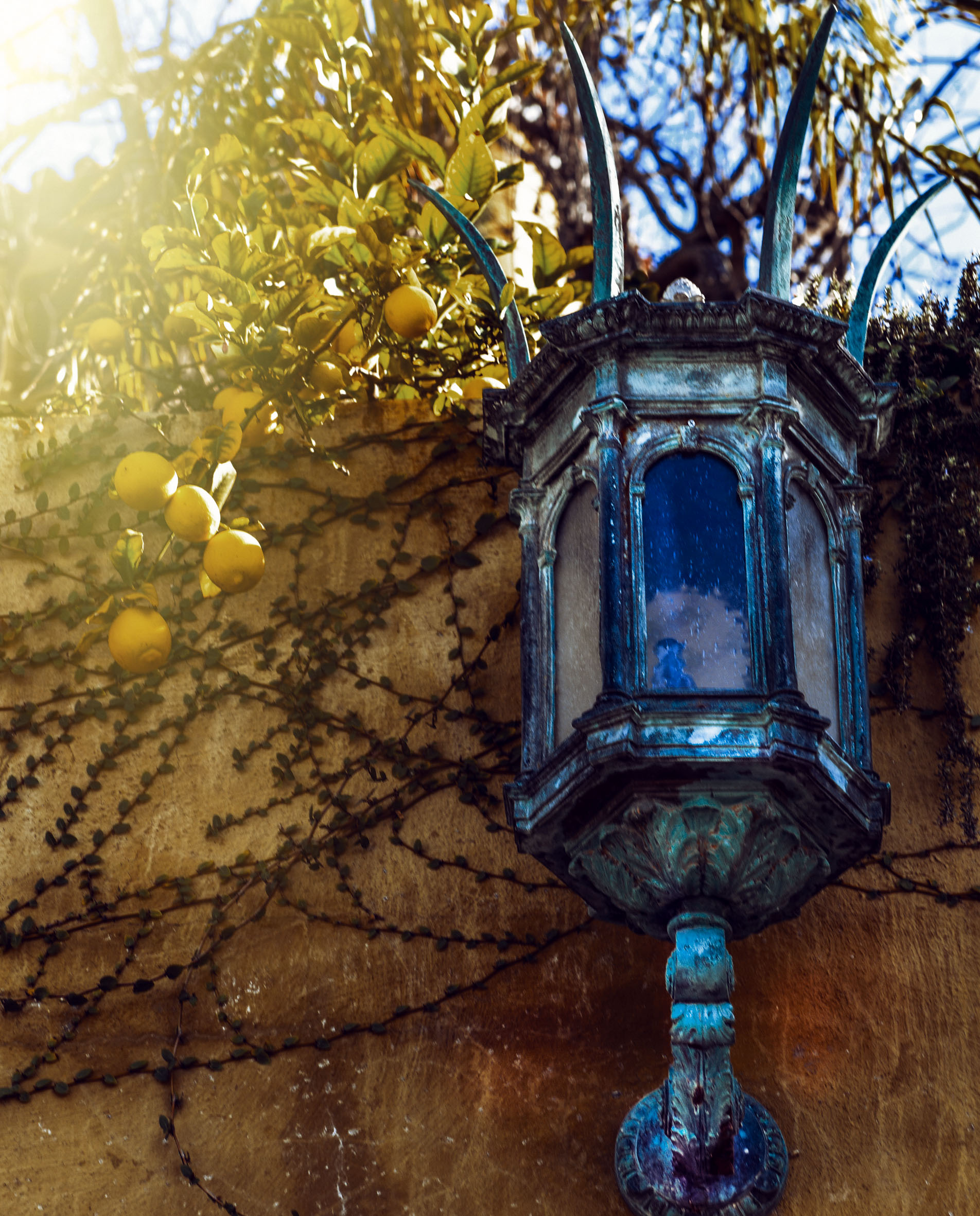 Gothic Sconce with Lemon Tree