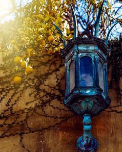 Gothic Sconce with Lemon Tree