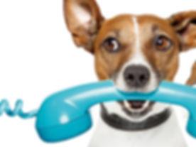 Doggie-Phone.jpg
