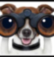 Search Dog.jpg