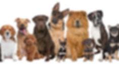 Dog Family.jpg
