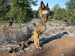 Dog harness.jpg