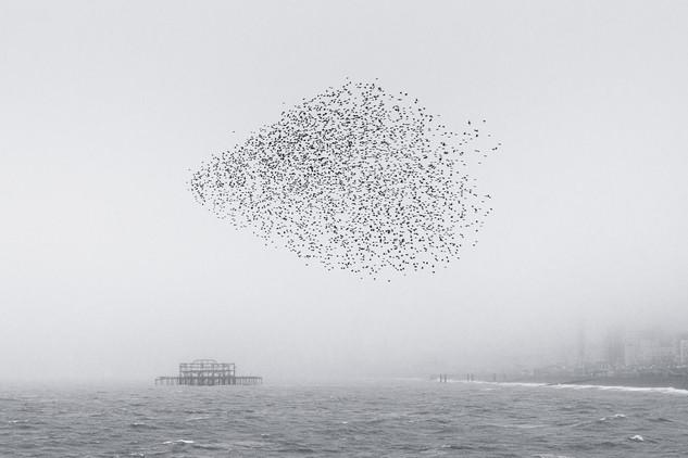 MCATTELL_Fog Pier I.jpg