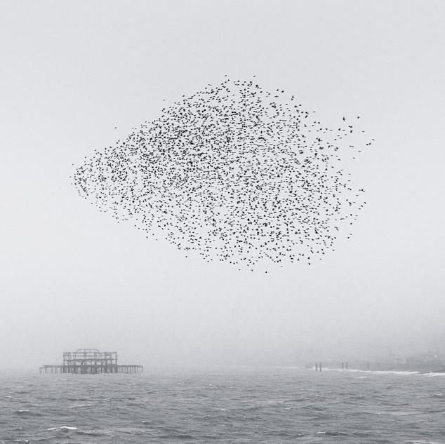 Fog Pier I