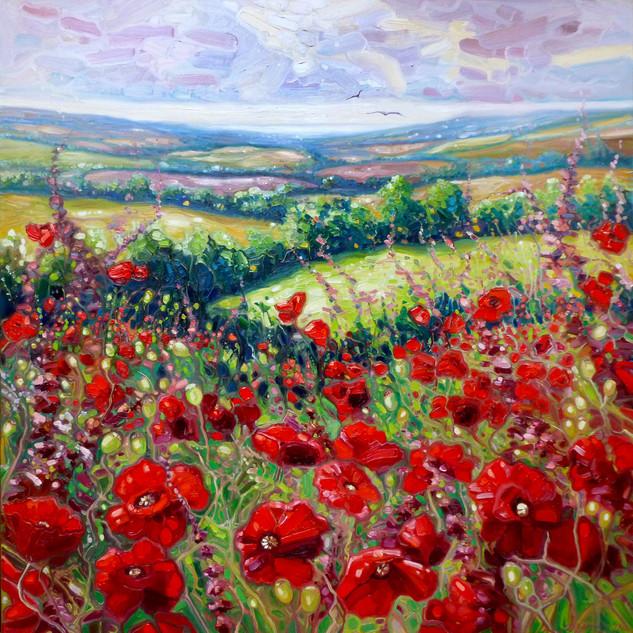 Summer-poppies-in-a-Sussex-meadow.jpg