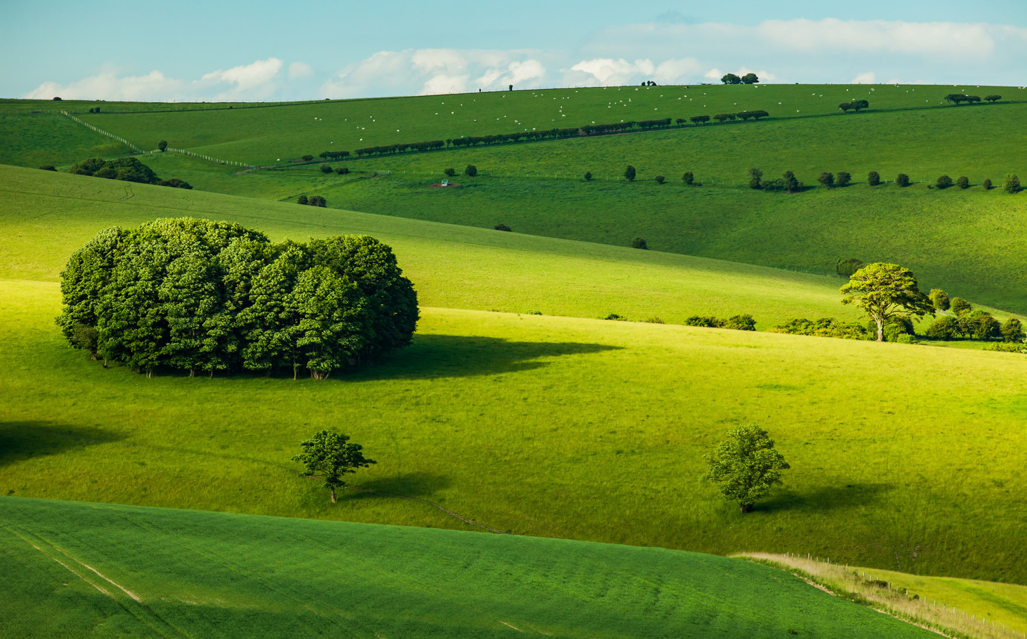South Downs near Stanmer, East Sussex, 30th May 2017.