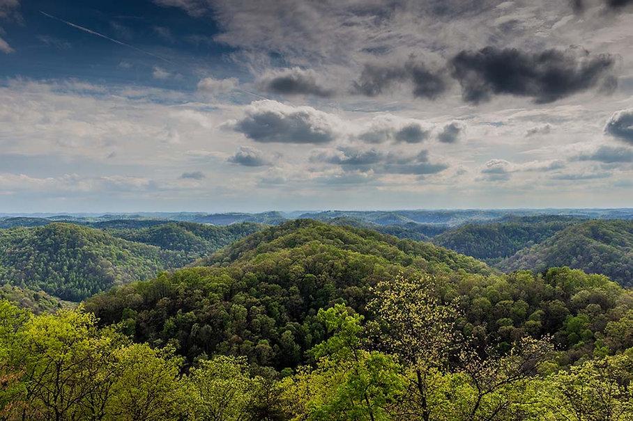 Green Forests Work Reforestation Benefits