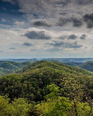 Robinson_Forest.jpg
