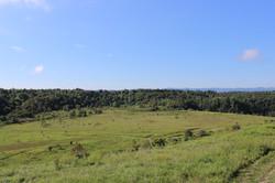 Help turn these grasslands...