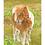 Thumbnail: Shetland Pony and Foal: