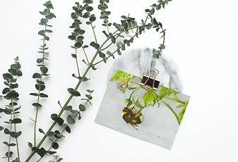 Bumblebee in clip card.jpg