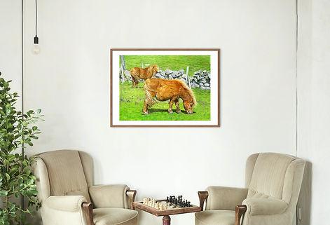 Ponies grazing.jpg