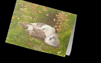 Fulmar transparent card.png