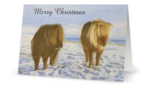 Christmas Card: Shetland Ponies: 'Winter Coats'