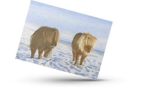 Ponies snow transparent card.png