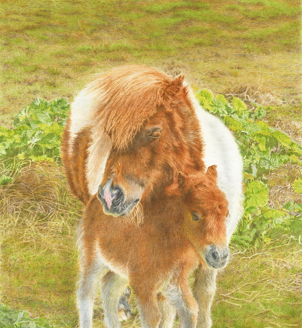 Pony and Foal SCP600.jpg