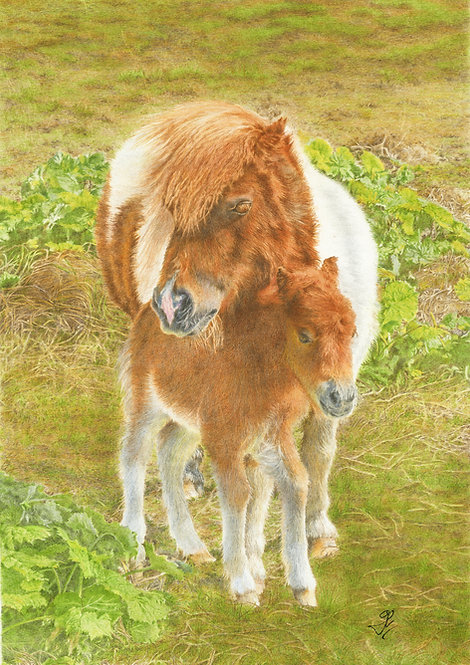 Shetland Pony and Foal: Print In Mount: