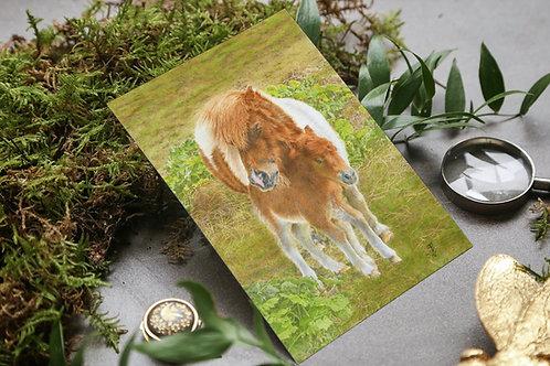Shetland Pony and Foal: