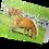 Thumbnail: Shetland Ponies Grazing: