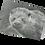 Thumbnail: Shetland Sea Otter:
