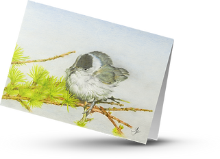Blackcap transparent card.png