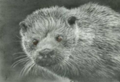 Otter Graphite SC600P.jpg