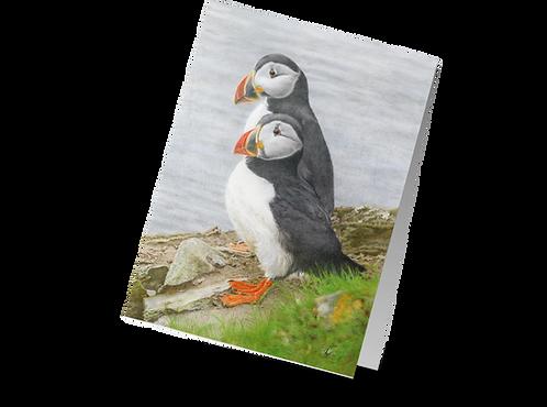 Shetland Puffins: (Tammie Norries)