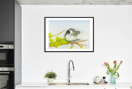 Blackcap mounted frame.jpg